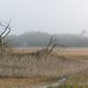 Folly Island marshes