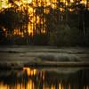 Sunrise, Hobcaw Barony