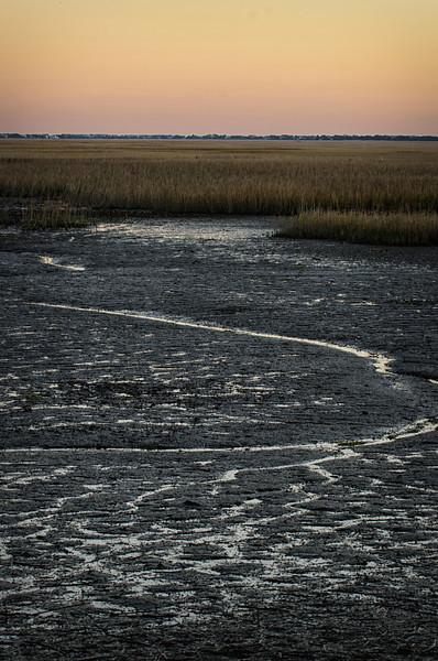 Salt Marsh at lowtide, Hobcaw Barony