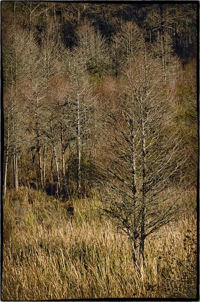 Heritage Plantation vegetation textures