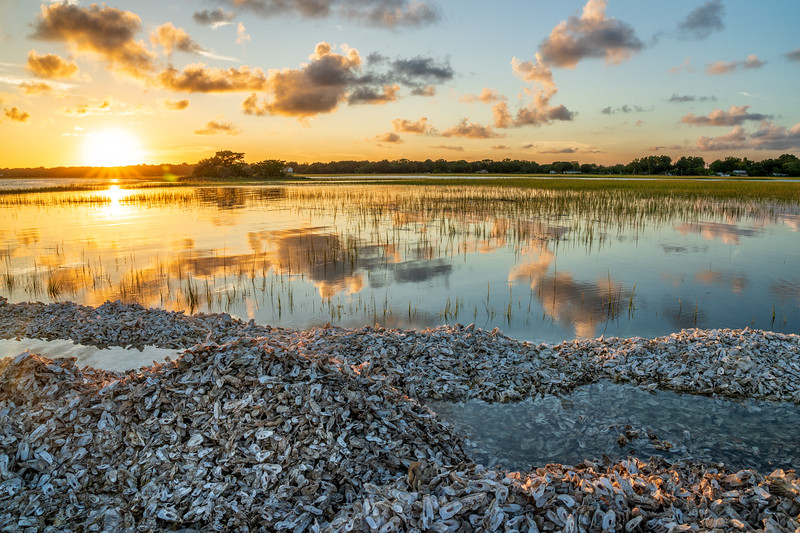 Piles of Oyster Shells, Bowens Island