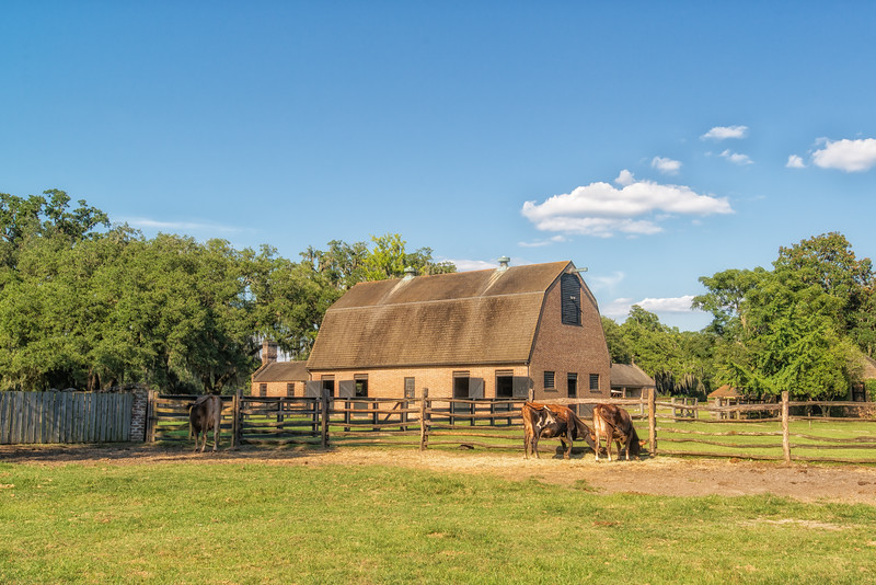 Middleton Place barns and cows