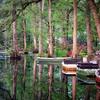 Cypress Gardens, Moncks Corner, SC