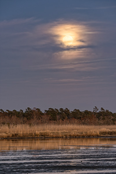 Full Moon over the Rice Fields, Mansfield Plantation