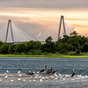 Arthur Ravenel bridge from Crab Bank Bird Sanctuary