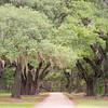 Avenue of Oaks, Laurel Springs Plantation, SC