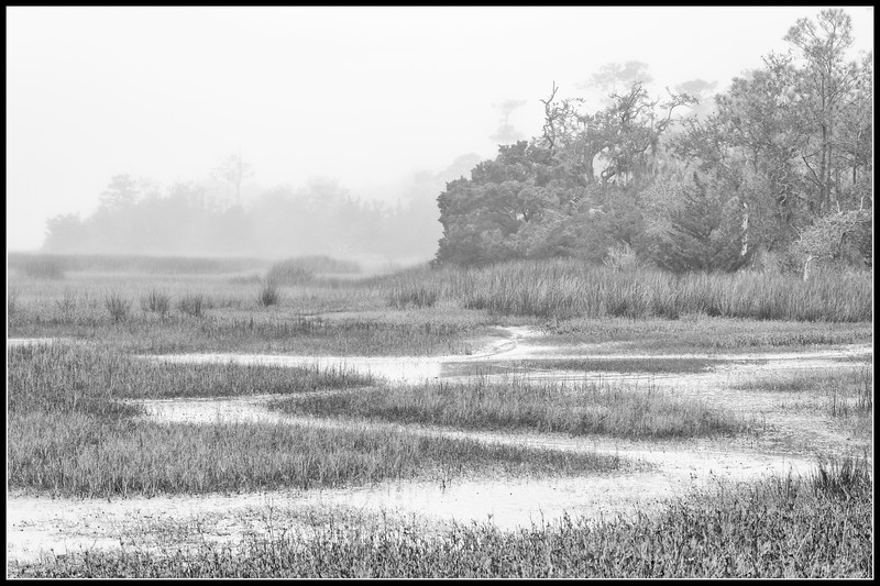 Foggy Morning in James Island County Park