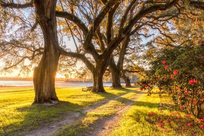 Early Morning at Mansfield Plantation