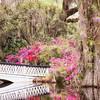 Magnolia Plantation and Gardens