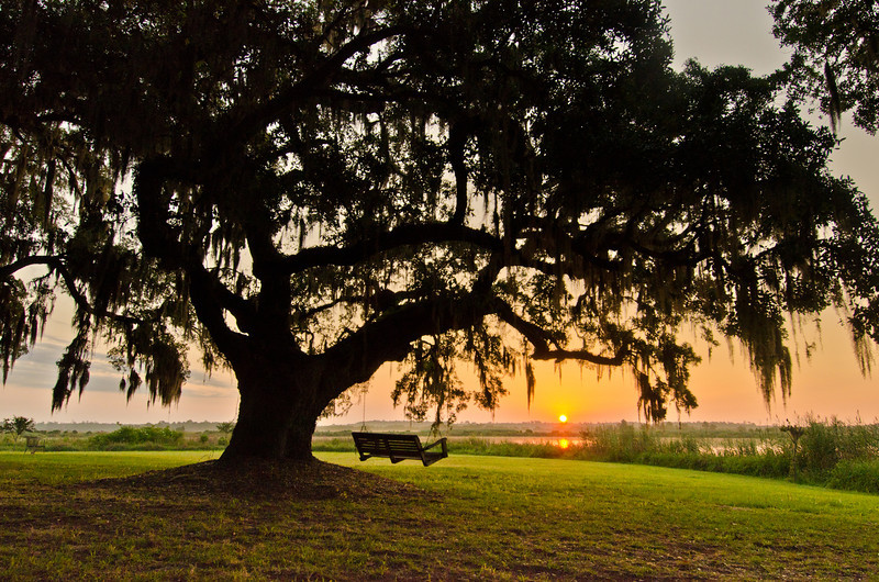 Sunrise at Mansfield Plantation
