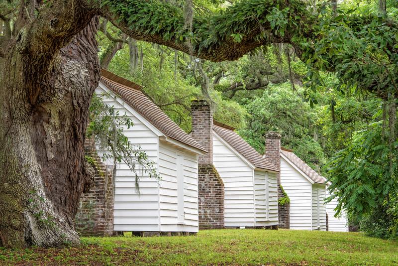 Oak and slave cabin row, May 2015