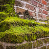 Moss and Ferns growing on slave cabin chimney