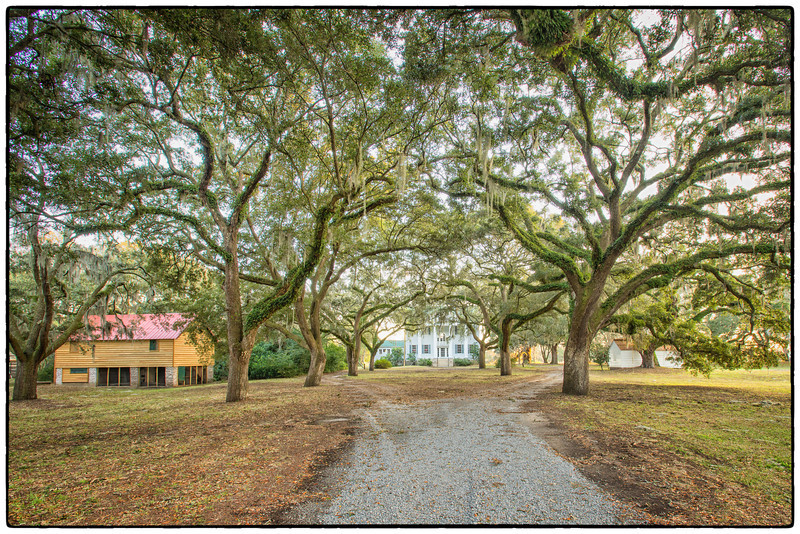 McLeod Plantation, December 2012