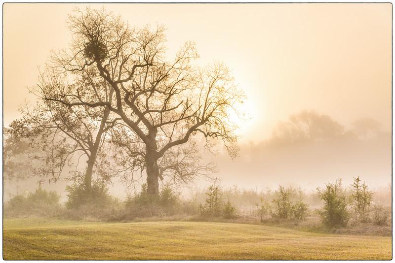 Foggy Morning, December 2012