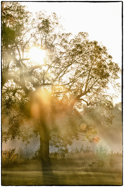 Morning Fog, November 2011