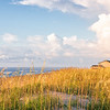 Sea Oats on dunes at Buxton, OBX