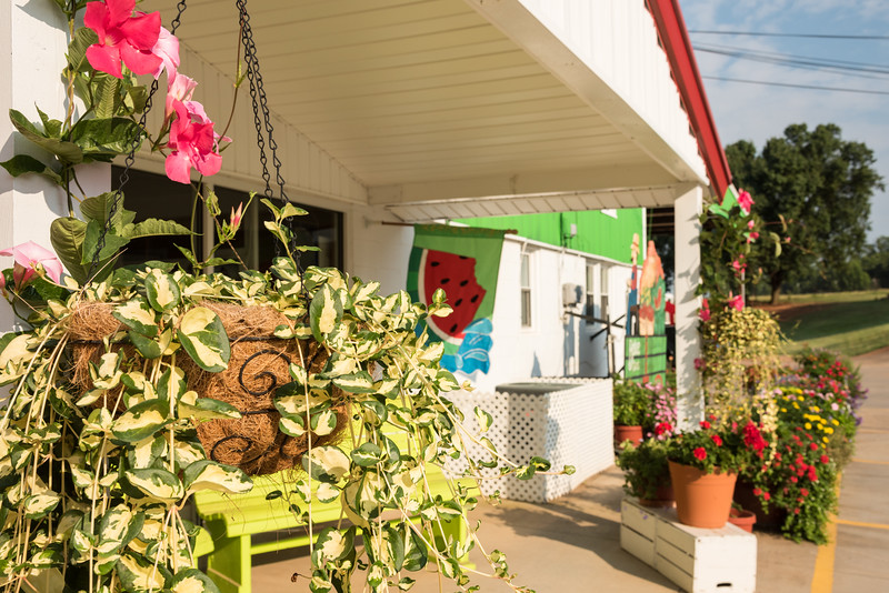 Brightly colored pot plants outside Belue Farm Stall, Boiling Springs, SC