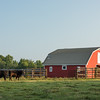 Red Barn and Black Angus cattle