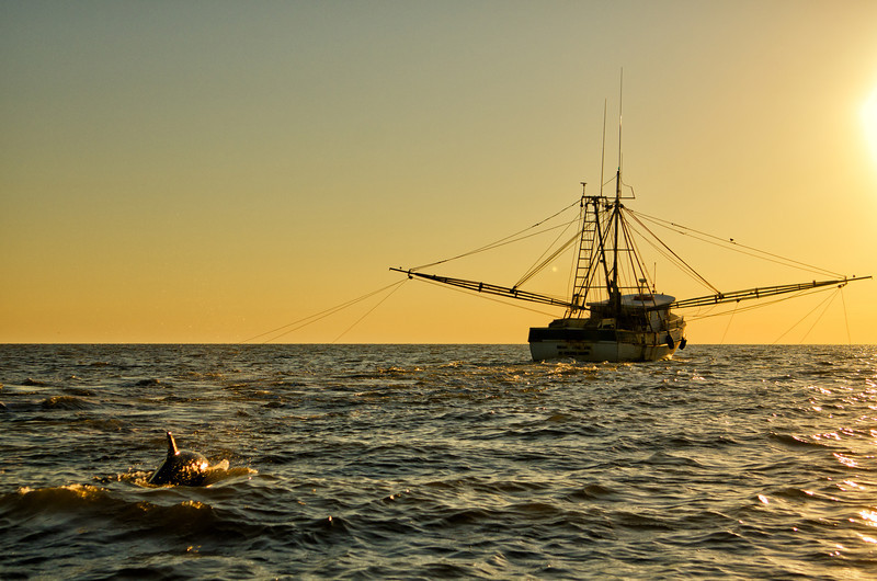 Shrimp boat and dolphin in the St. Helena Sound