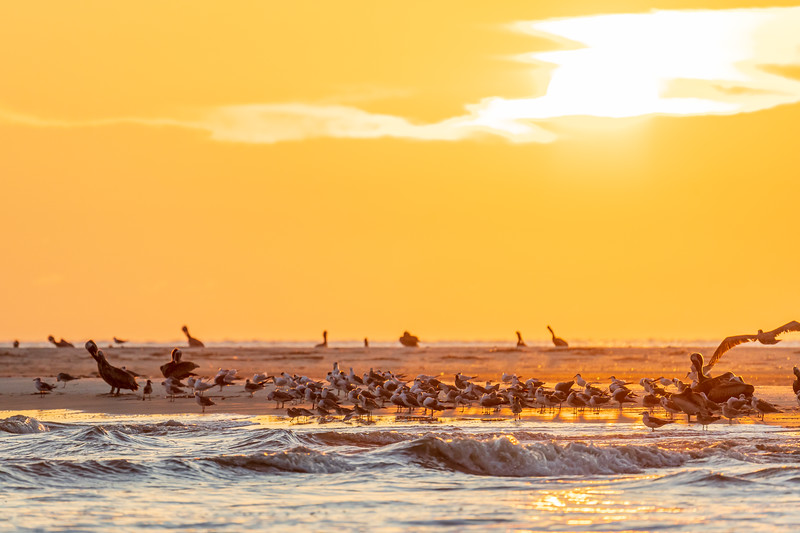 Shorebirds in the early morning