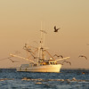 Shrimp boat and birds in the St. Helena Sound