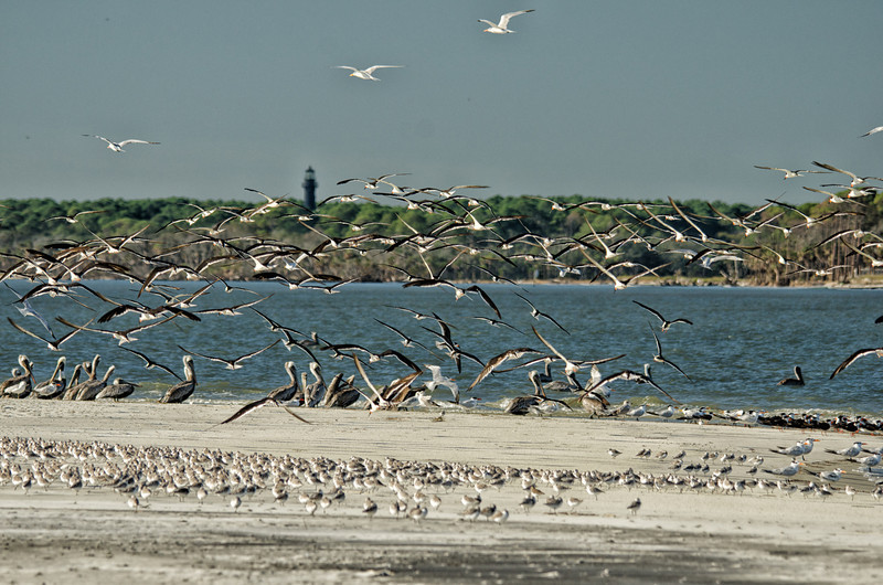 Hunting Island Lighthouse from the St. Helena Sound, Beaufort