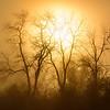 Foggy Winter Morning