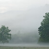 Early morning fog in Cataloochee Valley, NC