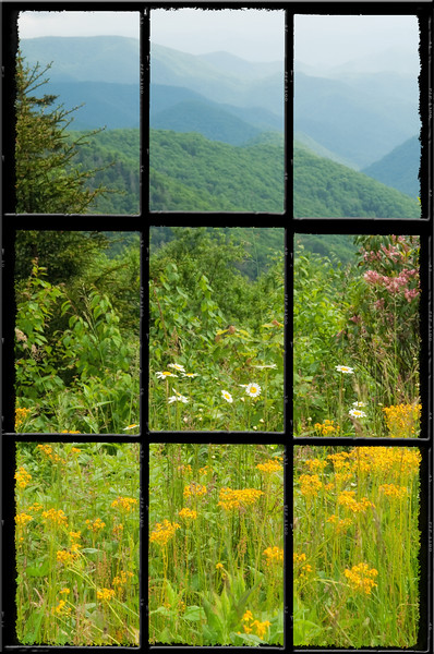 Wildflowers and views from the Blue Ridge Parkway