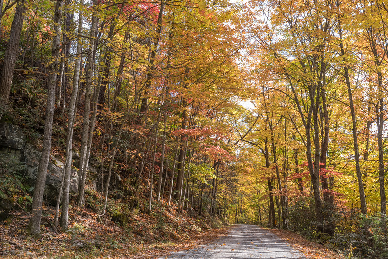 Fall color along the Old Cataloochee Turnpike, NC