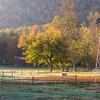 Gwynn Valley early morning