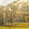 Gwynn Valley, Brevard