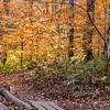 Trail to Skinny Dip Falls, NC