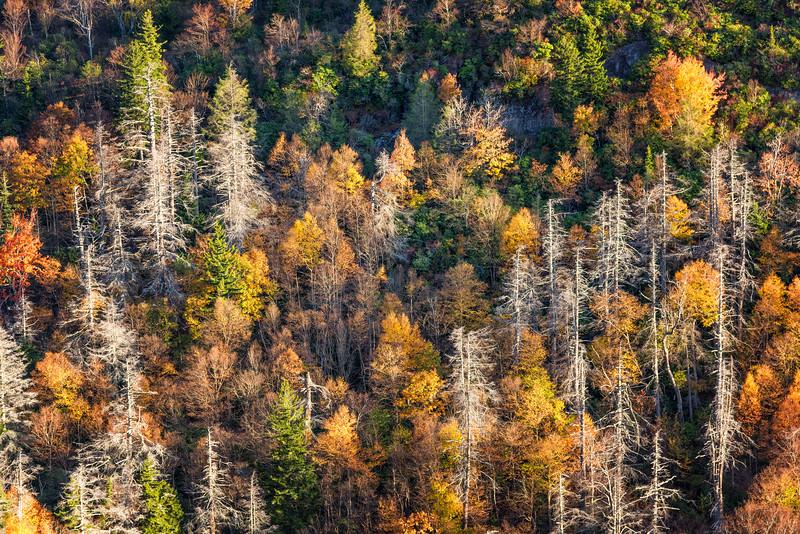Fall Tree Tapestry