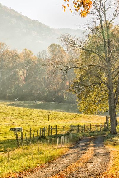 Early morning in Gwynn Valley
