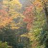 Fall color along NC-276