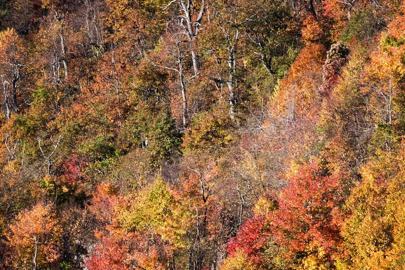 Blue Ridge Mountainside Fall Color
