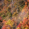 Blue Ridge Mountainside Fall Color