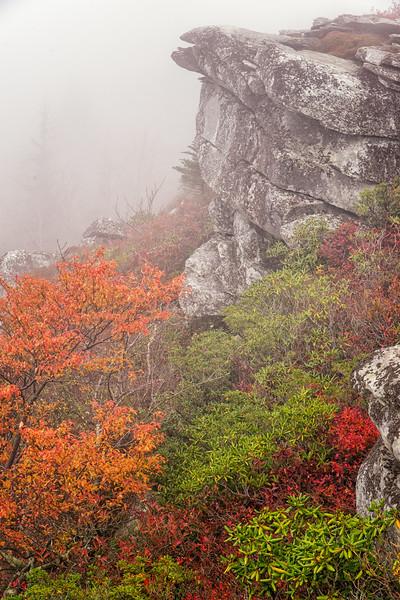 Rough Ridge in the fog
