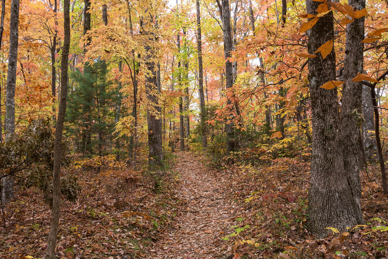 Caesars Head State Park hiking trail