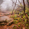 Craggy Pinnacle in the fog