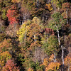 Fall color on Blue Ridge Mountainside