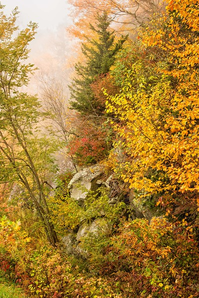 Roadside foliage, Blue Ridge Parkway