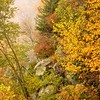 Roadside foliage, Blue Ridge Parkway