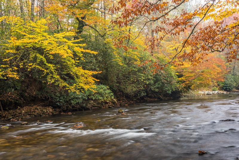 Davidson River, Brevard, NC