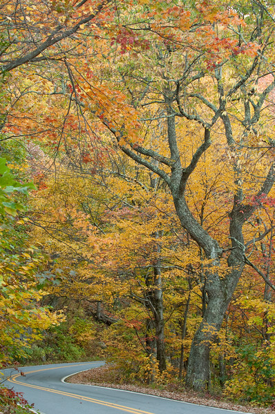 Fall color along NC-209