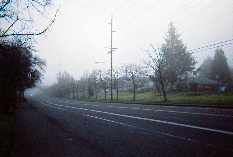 Foggy Day on the Road