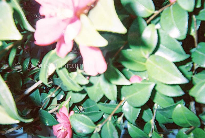 Rachel S. Photo #10