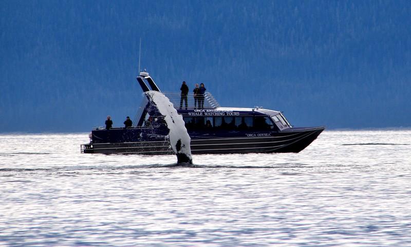 FLUKE SLAPPING - JUNEAU, ALASKA