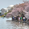 Cherry Day for a Walk on the Mall